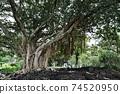 我去了夏威夷大島的Liliuokalani公園 74520950