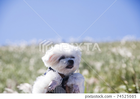 CUTE PUPPY on the reeds 74525085