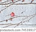 葡萄藤在混凝土牆上的最後秋天的落葉 74539917