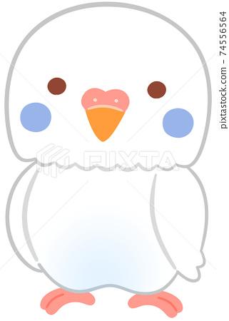 長尾小鸚鵡的角色 74556564