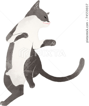 Dancing black and white cat 74559937