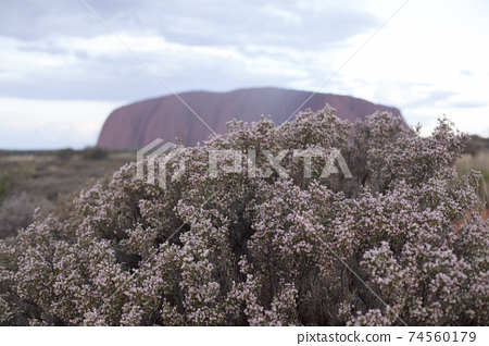 艾爾斯岩在花上陰霾 74560179