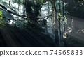 Misty jungle rainforest in fog 74565833