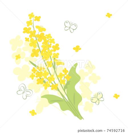 強姦花朵和蝴蝶的背景插圖 74592716