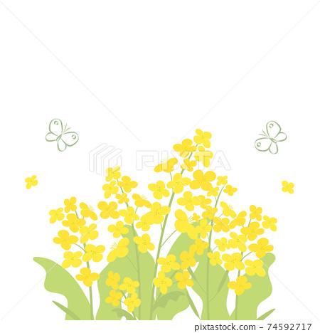 強姦花朵和蝴蝶的背景插圖 74592717