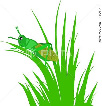 草和可愛的蚱hopper 74593459