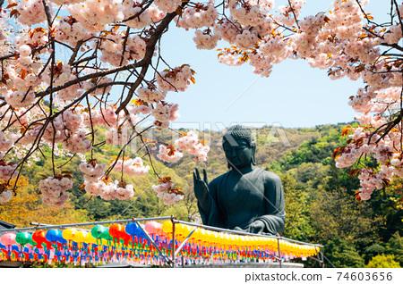 Buddha statue with cherry blossoms at Gakwonsa Temple in Cheonan, Korea 74603656