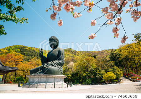 Buddha statue with cherry blossoms at Gakwonsa Temple in Cheonan, Korea 74603659