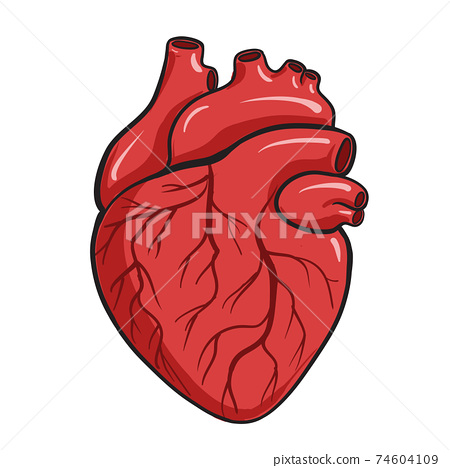 Vector illustration of a Human Heart 74604109