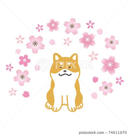 시바와 벚꽃의 일러스트 74611870
