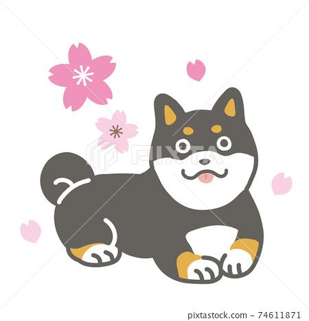 검은 시바와 벚꽃의 일러스트 74611871