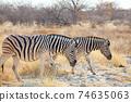 Zebra 74635063