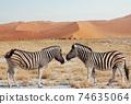 Zebra 74635064