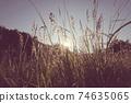 Wet grassland 74635065