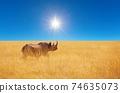 Rhino 74635073