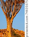 Quiver tree 74635075