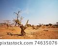 Namib desert 74635076