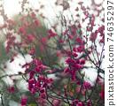 Lunar new year flower market 74635297