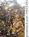 Lunar new year flower market 74635301