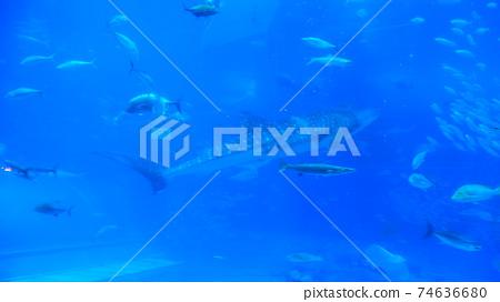 Aquarium shark 74636680