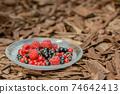 Portrait of Delicious Assorted Fresh Wild Berries 74642413