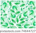 Illustration of Golden Pothos or Ivy Arum Plants Background 74644727
