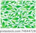 Illustration of Golden Pothos or Ivy Arum Plants Background 74644728