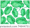 Illustration of Calathea Orbifolia or Peacock Plants Background 74644731