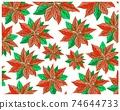Christmas Poinsettia or Euphorbia Pulcherrima Flowers Background 74644733