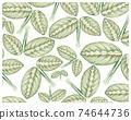 Illustration of Calathea Makoyana or Peacock Plants Background 74644736