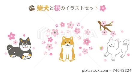 시바와 벚꽃의 일러스트 세트 74645824