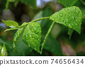 water drops on the green leaves. beautiful close up nature background. freshness concept 74656434
