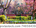 urban scenery with cherry blossom. bench and lantern under the trees. masaryk park in uzhgorod. beautiful sunny morning in springtime 74656439