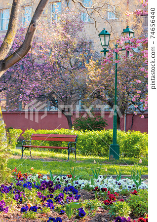 urban scenery with cherry blossom. bench and lantern under the trees. masaryk park in uzhgorod. beautiful sunny morning in springtime 74656440