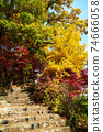 Stairway to colorful forest. 74666058