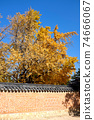 Autumn yellow ginkgo leaves with traditional building in Seoul, Korea. 74666067