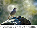 A little bird stand on a rock with donuts bokeh. Female of plumbeous water redstart. 74666082