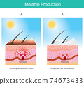 Melanin Production. Illustration showing colour human skin affect from UV rays the cause of stimulations melanocyte cell in skin layers.. 74673433