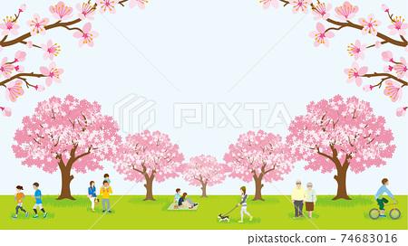 꽃놀이를 즐기는 사람들 만개 한 벚꽃 74683016