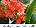 熱帶花卉 74685505