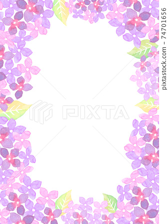 水彩畫的繡球花的插圖框架 74701656