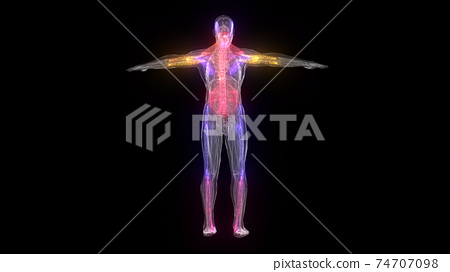 Abstract Male Anatomy isolated in black background 74707098