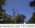 Blue sky and dead tree 74716606