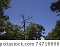 푸른 하늘과 고목 74716606