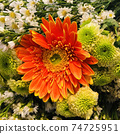 Close up fresh orange and yellow gerbera daisy Flower with various small white daisy flower background for spring season 74725951