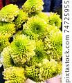 Close up fresh green Chrysanthemum Flower bouquet for spring season 74725955