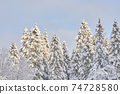 trees in the snow. winter 74728580