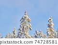 trees in the snow. winter 74728581