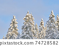 trees in the snow. winter 74728582