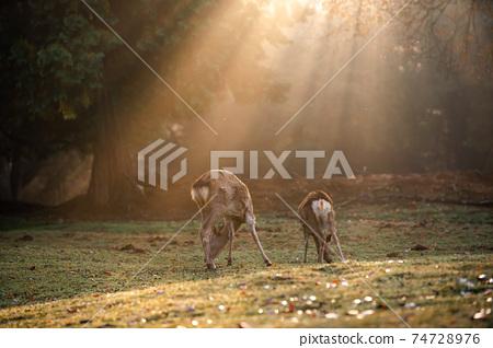 가을의 나라 공원의 사슴을 촬영 한 것 74728976